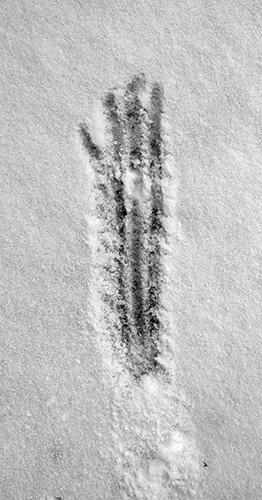04_Huellas-en-la-nieve