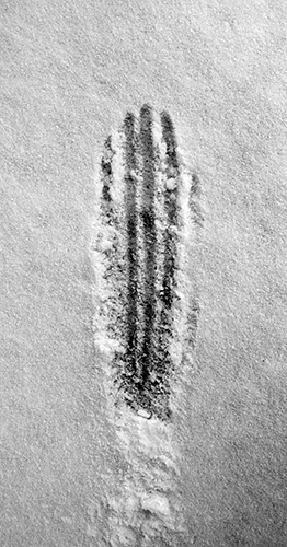 05_Huellas-en-la-nieve